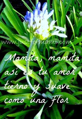 Poemas Canciones Para El Dia De La Madre Para Niños Poema Corto Para Ninos Mamita Con Imagenes Poemas Cortos