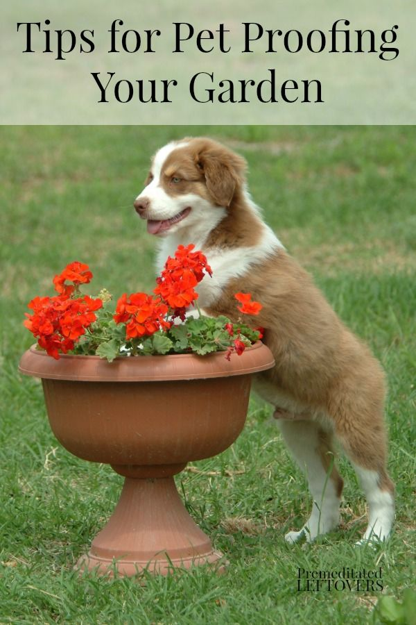 Tips For Pet Proofing Your Garden Here Are Some Ways You Can Make Your Garden A Safe Place For For Your Pets To Play Pet Proof Cat Safe Plants Pets