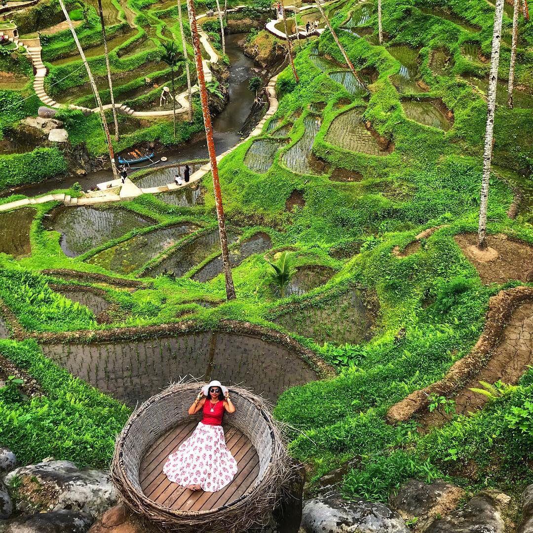 Rekomendasi Tempat Wisata Alam Bali Tegalalang Ubud Alam