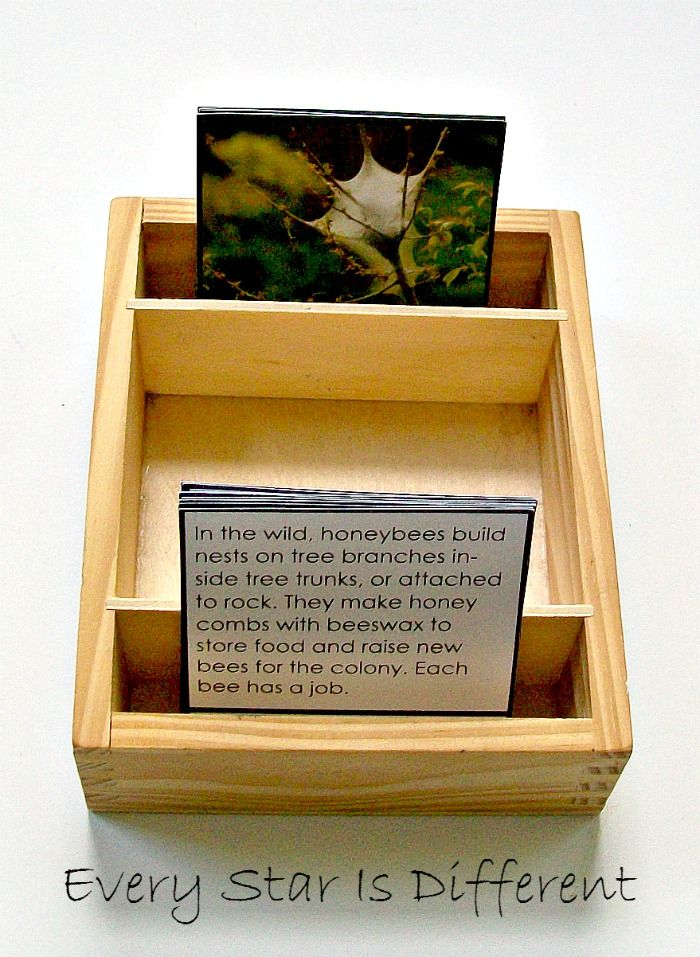 Insect home matching cards