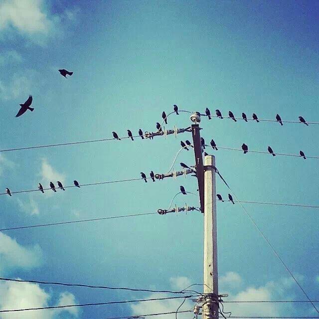 Pájaros en el alambre  By: Sarai Hernández