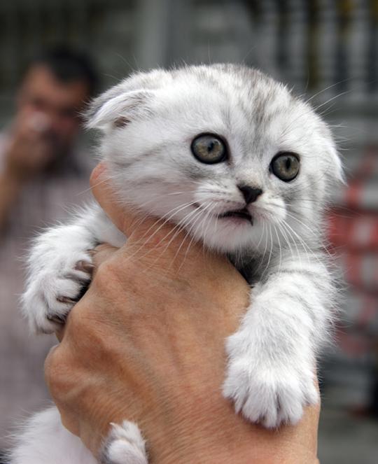Cutest Little Fearful Persian Mix Kitten Cute Kitten