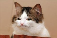 disgusted cat - Google Search | Funny cats and dogs, Grumpy cat, Cats
