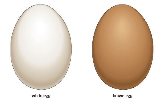 01 2 white brown egg jpg 573 349 brown and white pinterest brown