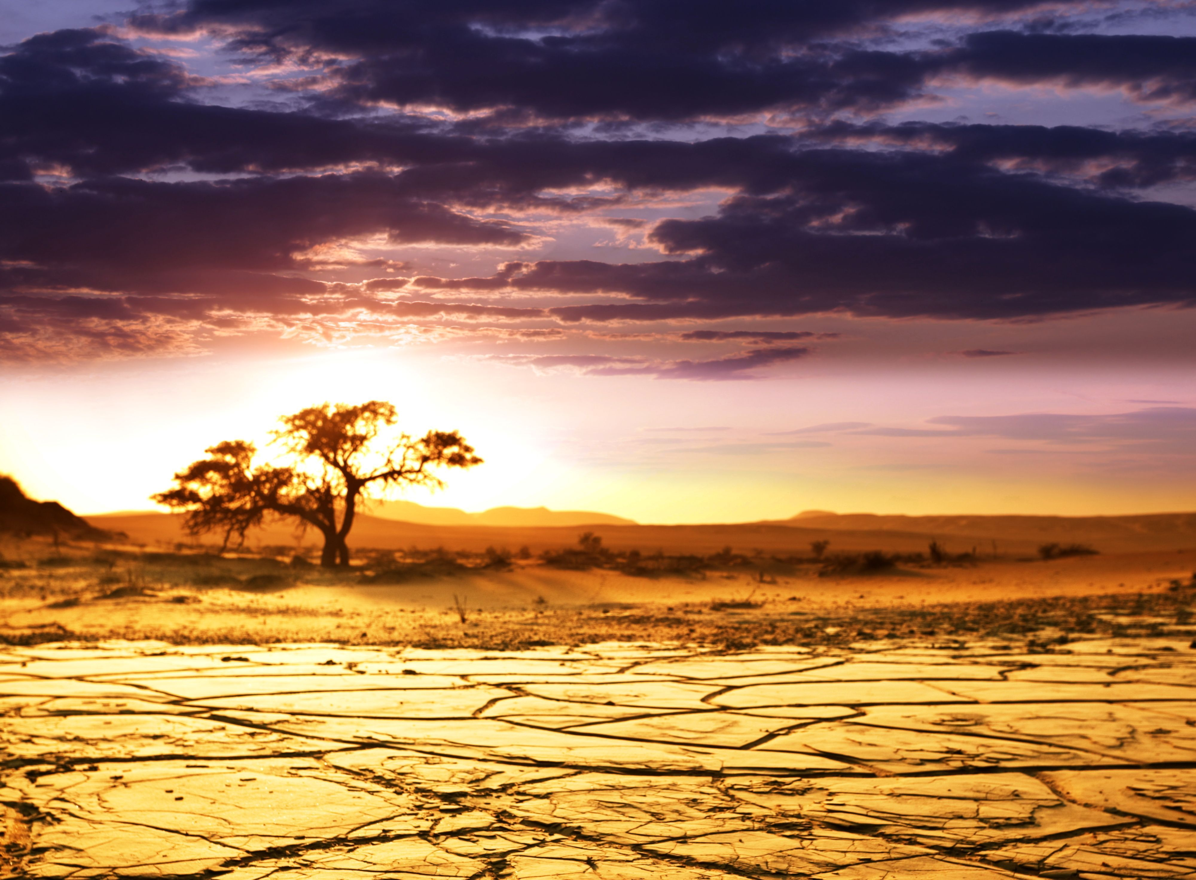 Download wallpaper Africa, savannah, landscape, horizon