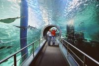 Melbourne Attraction Pass: Melbourne Aquarium and Eureka Skydeck 88 #melbourneaquarium #eurekatower