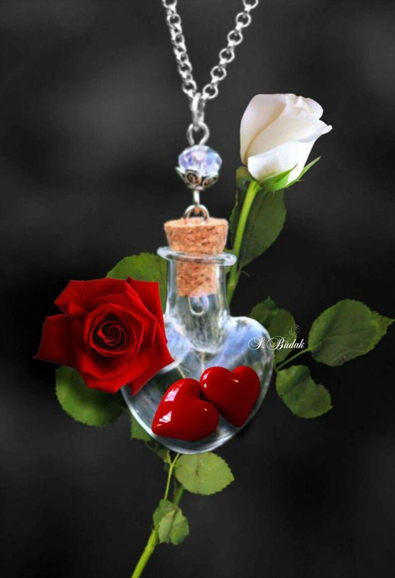Romantisch Com Imagens Rosas Lindas Rosas Vermelhas Rosas