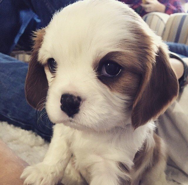 This Little Girl Who Easily Has The Cutest Puppy Dog Eyes In