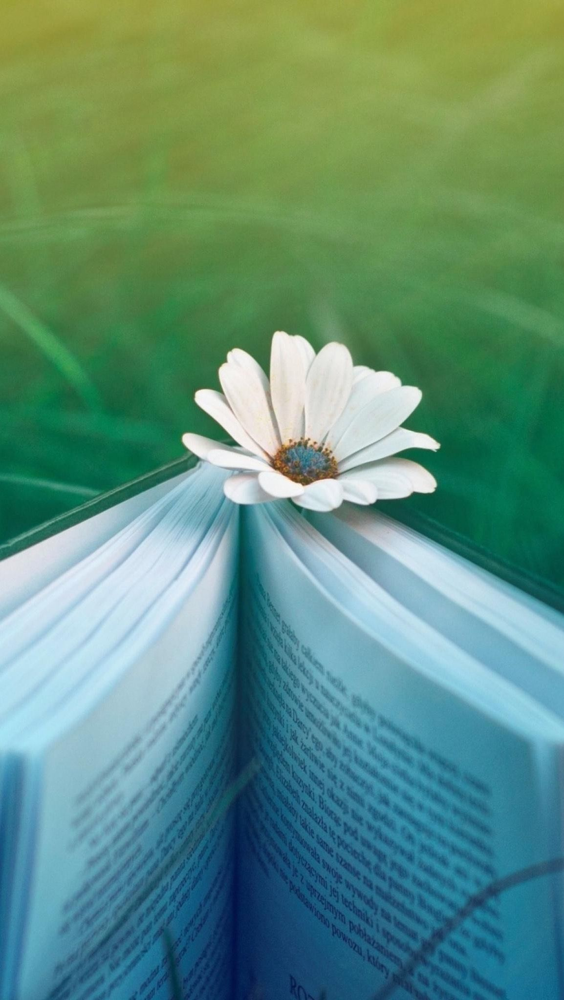 Pin by Ivy Marrow on Rain Book flowers, Book wallpaper