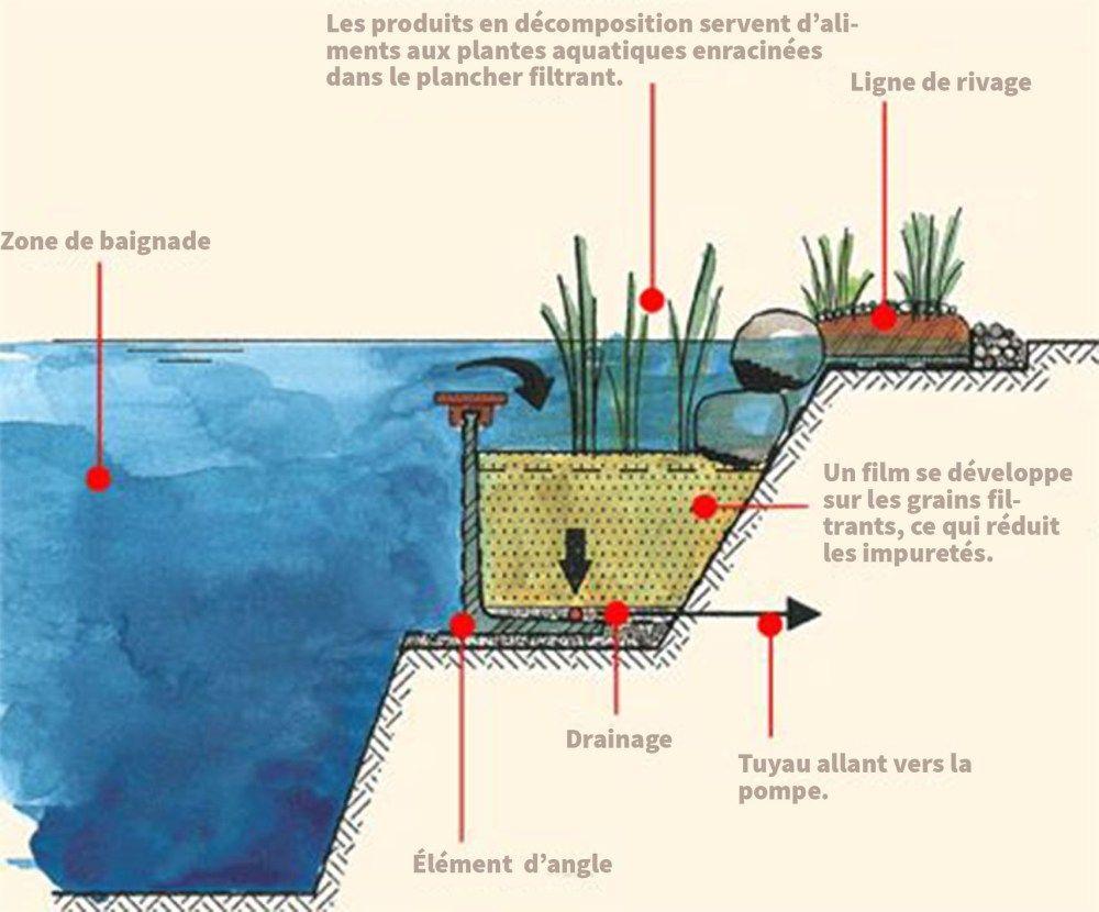Fabriquer soi m me une piscine naturelle et cologique - Autoconstruction piscine naturelle ...