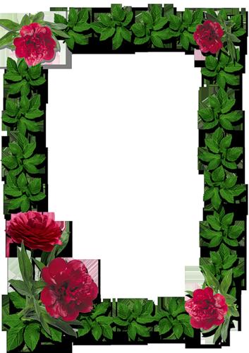 Frame Rose Photoshop Boarders And Frames Photo Frame Wallpaper Flower Frame