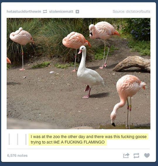 Goose pretending to be a flamingo