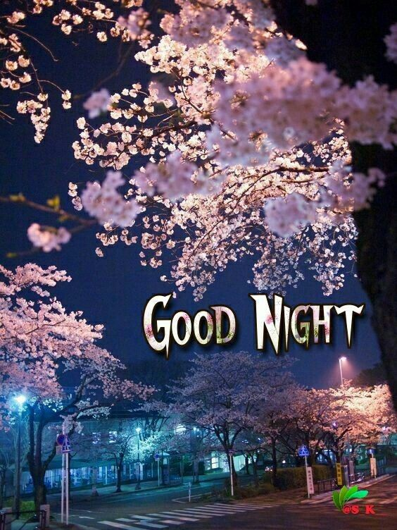 Goodnight sister sweet dreams 💖🌼☕🌜🌜🌹💟