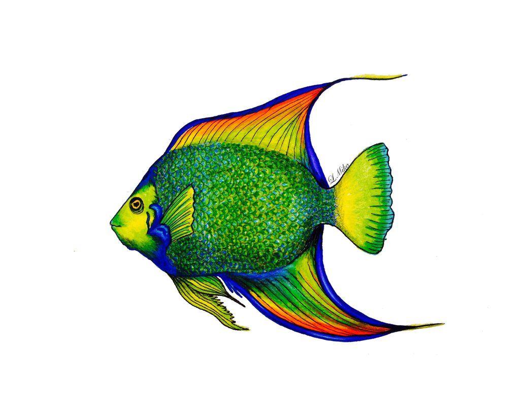 Rainbow Fish | Dibujo