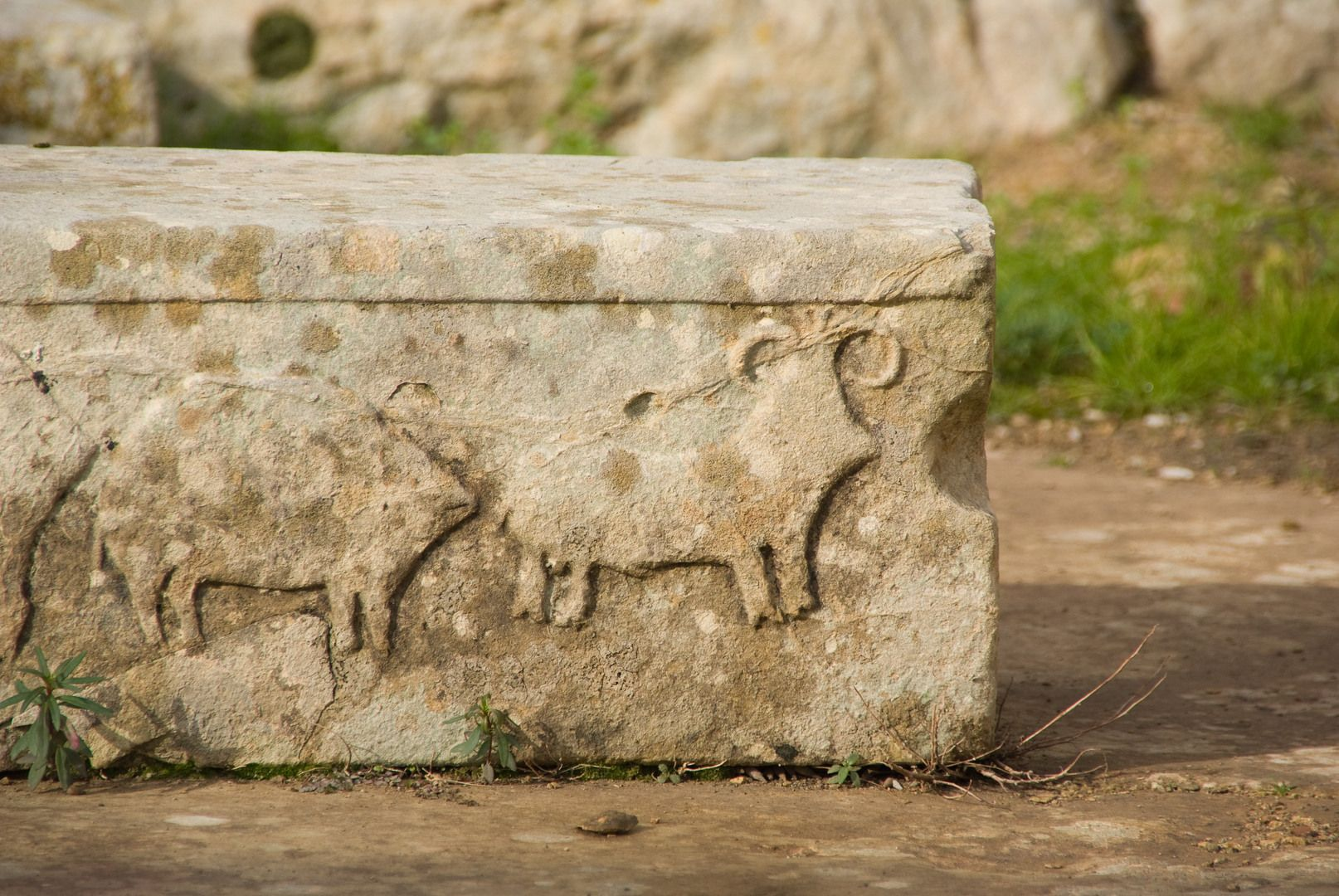 3600-2500 Malta Animal Relief of a bull and sow part of monumental structures from Tarxien, Malta. Maltese prehistory has been recalibrated to 3rd millennia BCE. The prehistoric Maltese cultures developed earlier and independently of the Egyptian pyramids or Stonehenge.