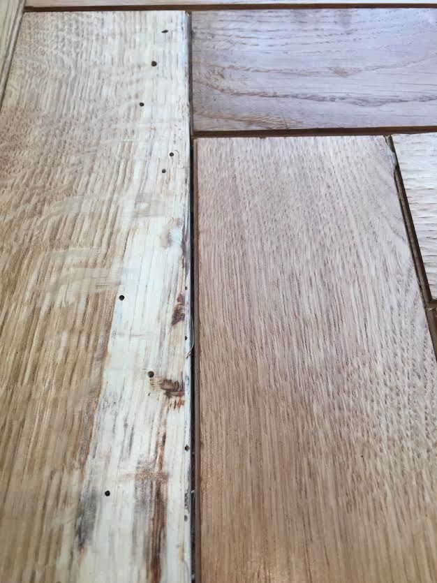 How To Identify And Treat Wood Worms Blog ESB Flooring - How to treat wooden floors