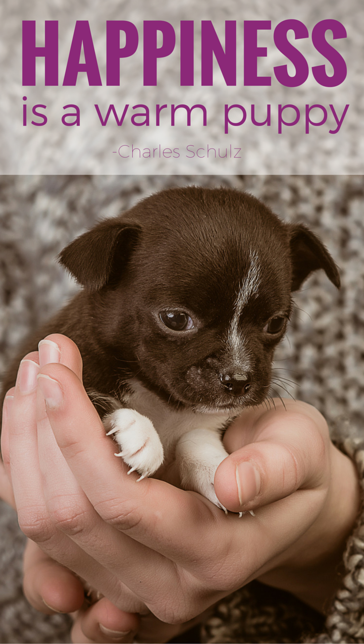 """""""Happiness is a warm puppy."""" Charles M. Schulz Animal"""