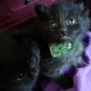 Please Help the Hex Kittens Help Four Kittens. Your help
