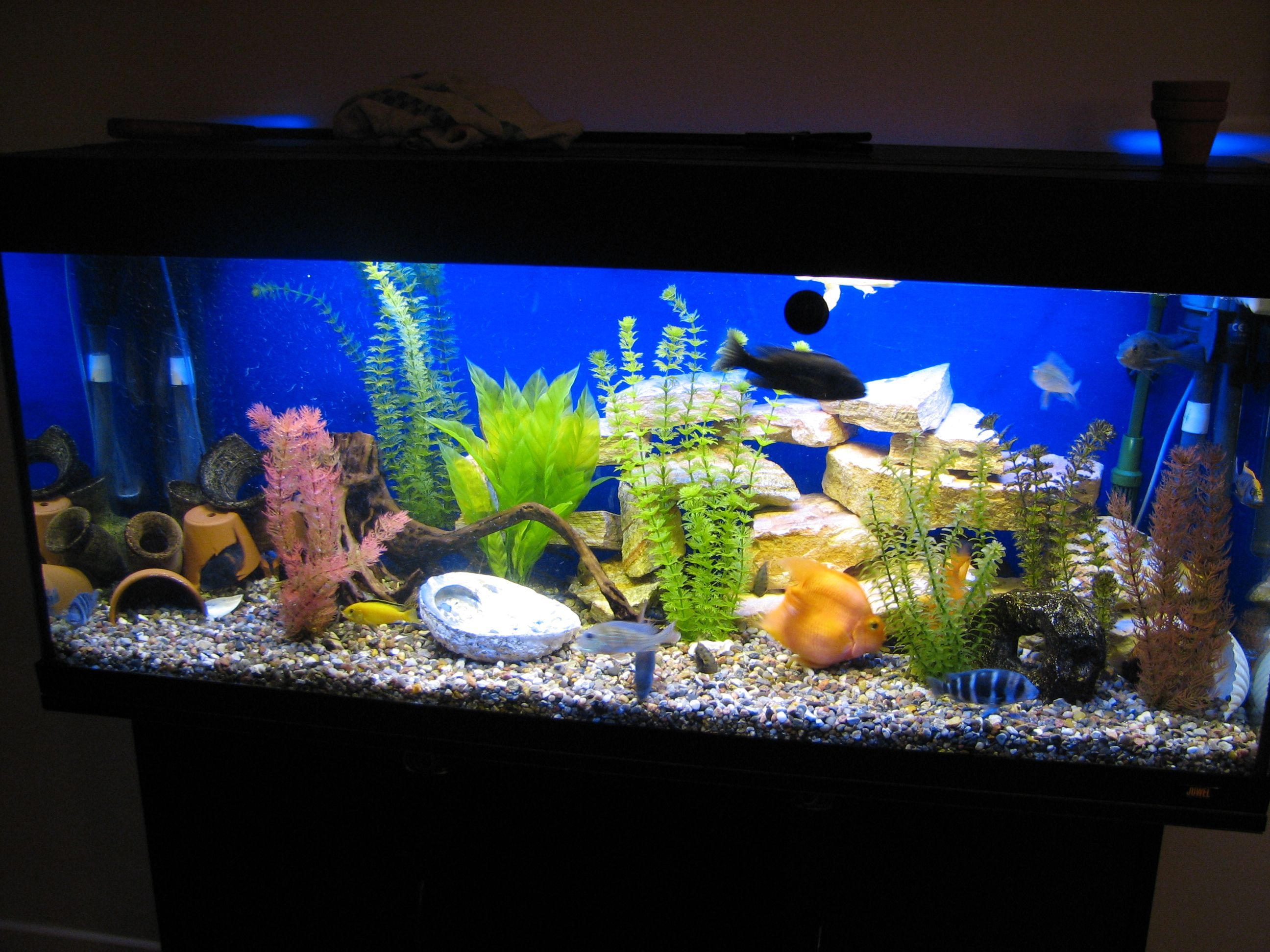 Aquarium with artificial plants like the blue background for Fish tank sand