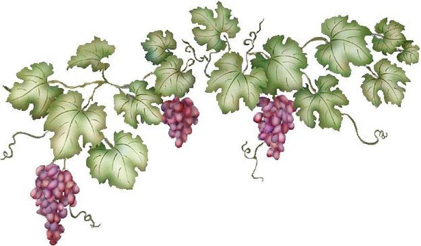 Related Image Vine Drawing Grape Vine Trellis Grape Vines