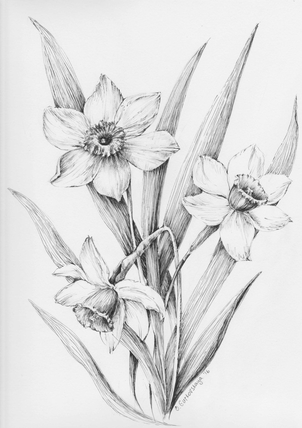 Daffodil Flowers Narcissus Black And White By Krazykatlady2015