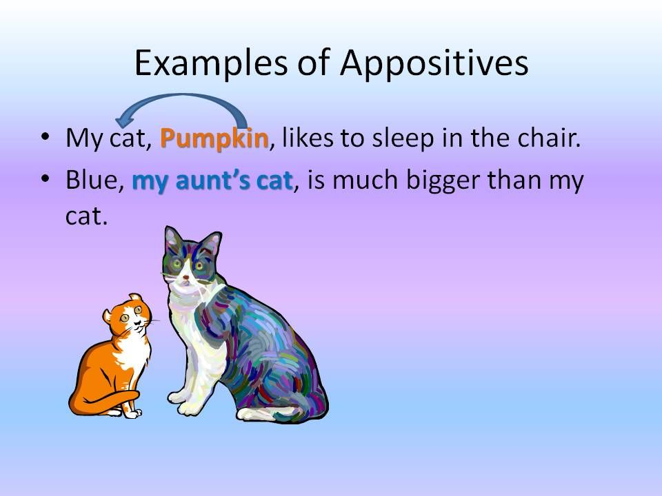 Sentence Diagramming Diagramming Appositives Sentences
