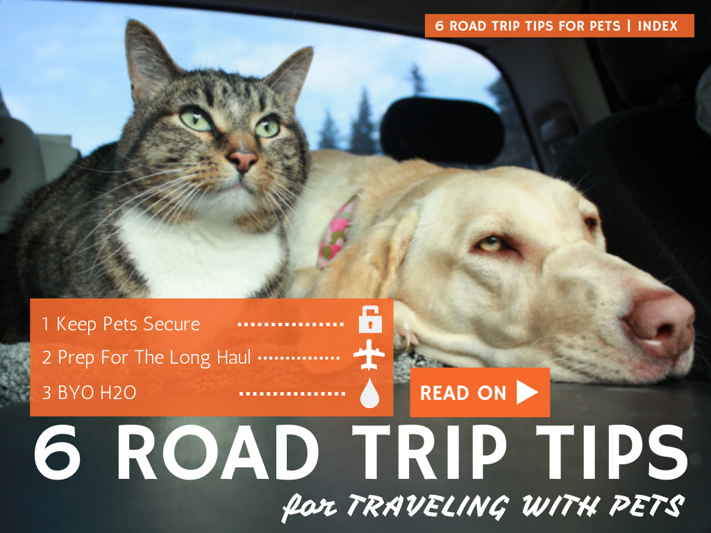 Goin For A Road Trip This Weekend Bring Your Pets Along Just Follow These 6 Road Trip Tips For Traveling With Your Pets Pet Travel Dog Travel Trip