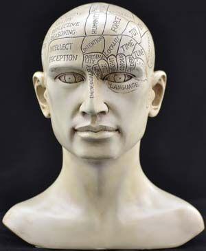 Alchemist Statue Head Phrenology
