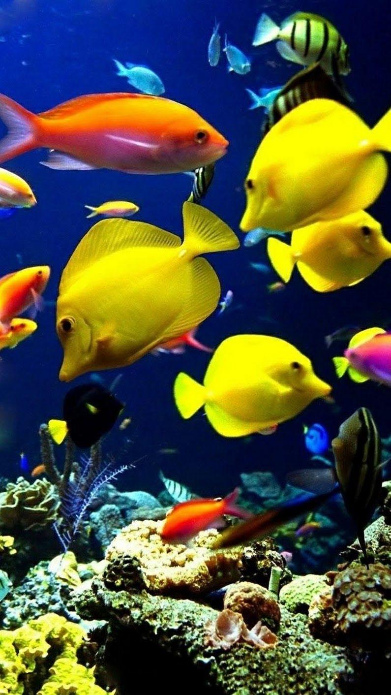 Anna Meerestiere Ozean Kreaturen Tropische Fische