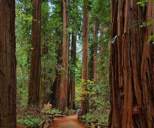 redwood #favoriteplaces