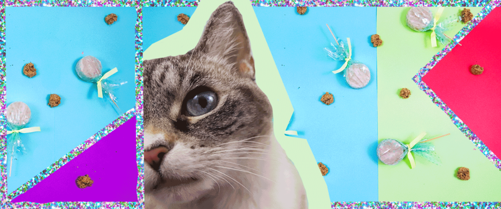 Candy for your Cat DIY Cat Treats in 2020 Diy cat