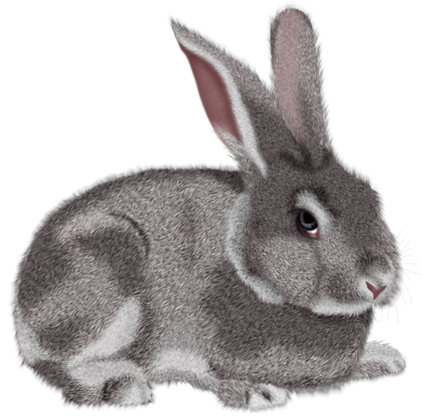 Grey Rabbit Png Clipart Picture Rabbit Png Rabbit Art Animal Doodles