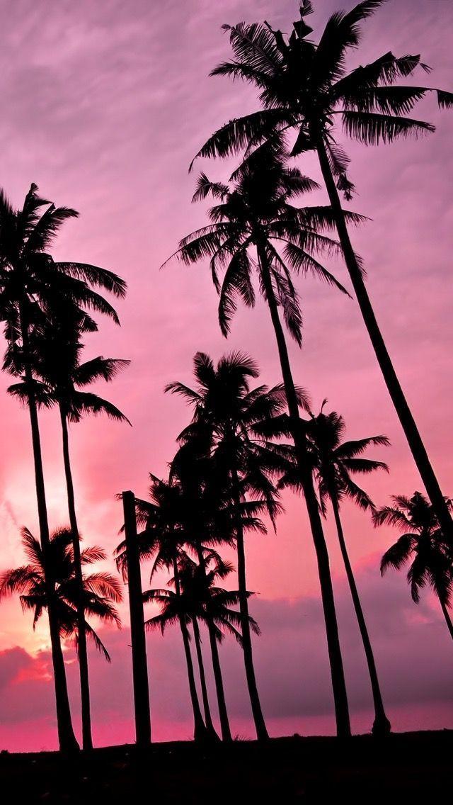 palms sundowner