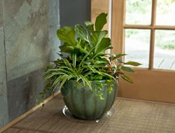 Create a Houseplant Container Garden Missing your garden this winter ...
