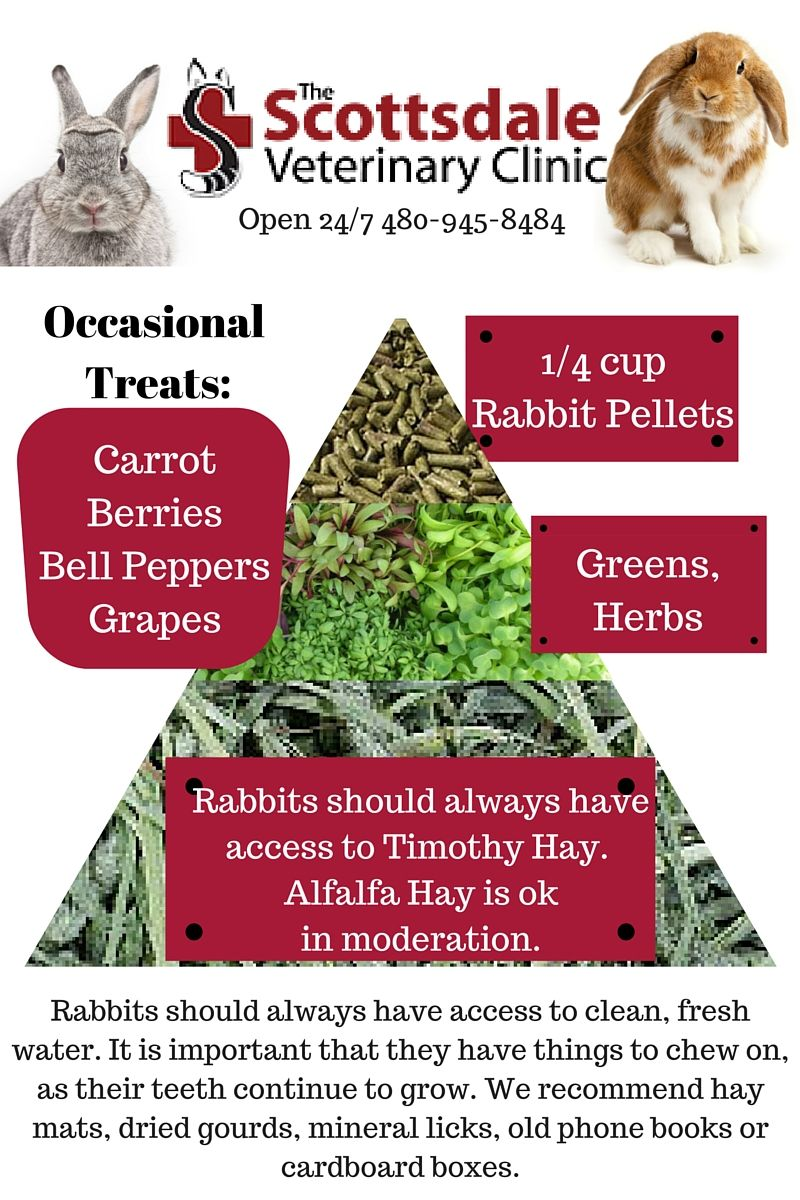 Rabbit Diet More Then Just Carrots Rabbits Should Always Have