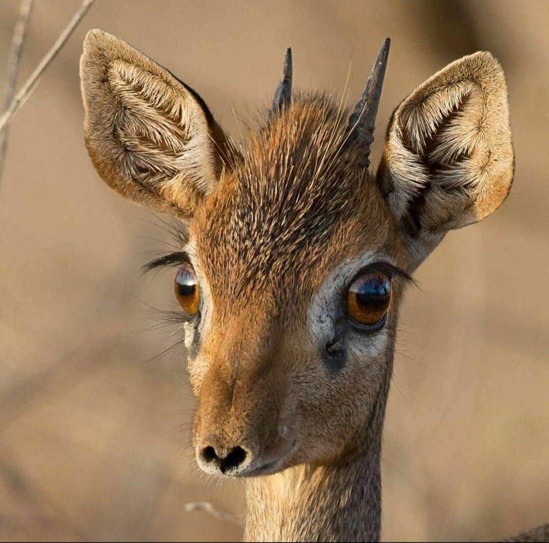 Pin on Animal cuteness