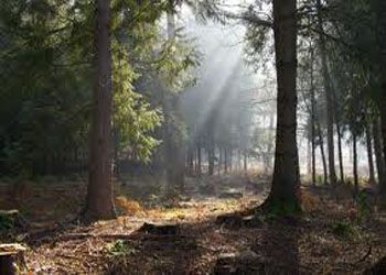 Le Foreste Incantate Della Gran Bretagna The Enchanted Forests Of Great Britain Forest Of Dean Forest Forest Background