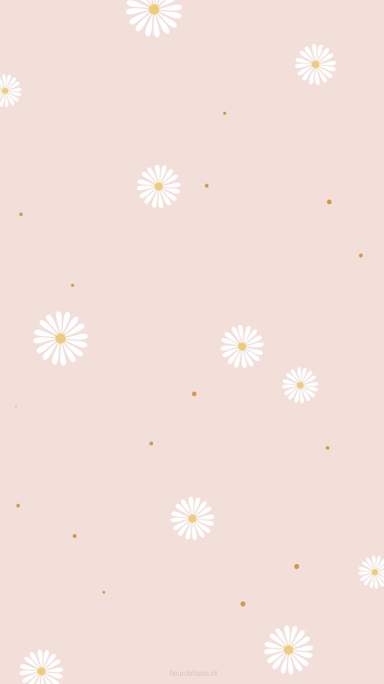 Daisies Wallpaper Background Daisy Wallpaper Wallpaper Iphone Cute Simple Iphone Wallpaper