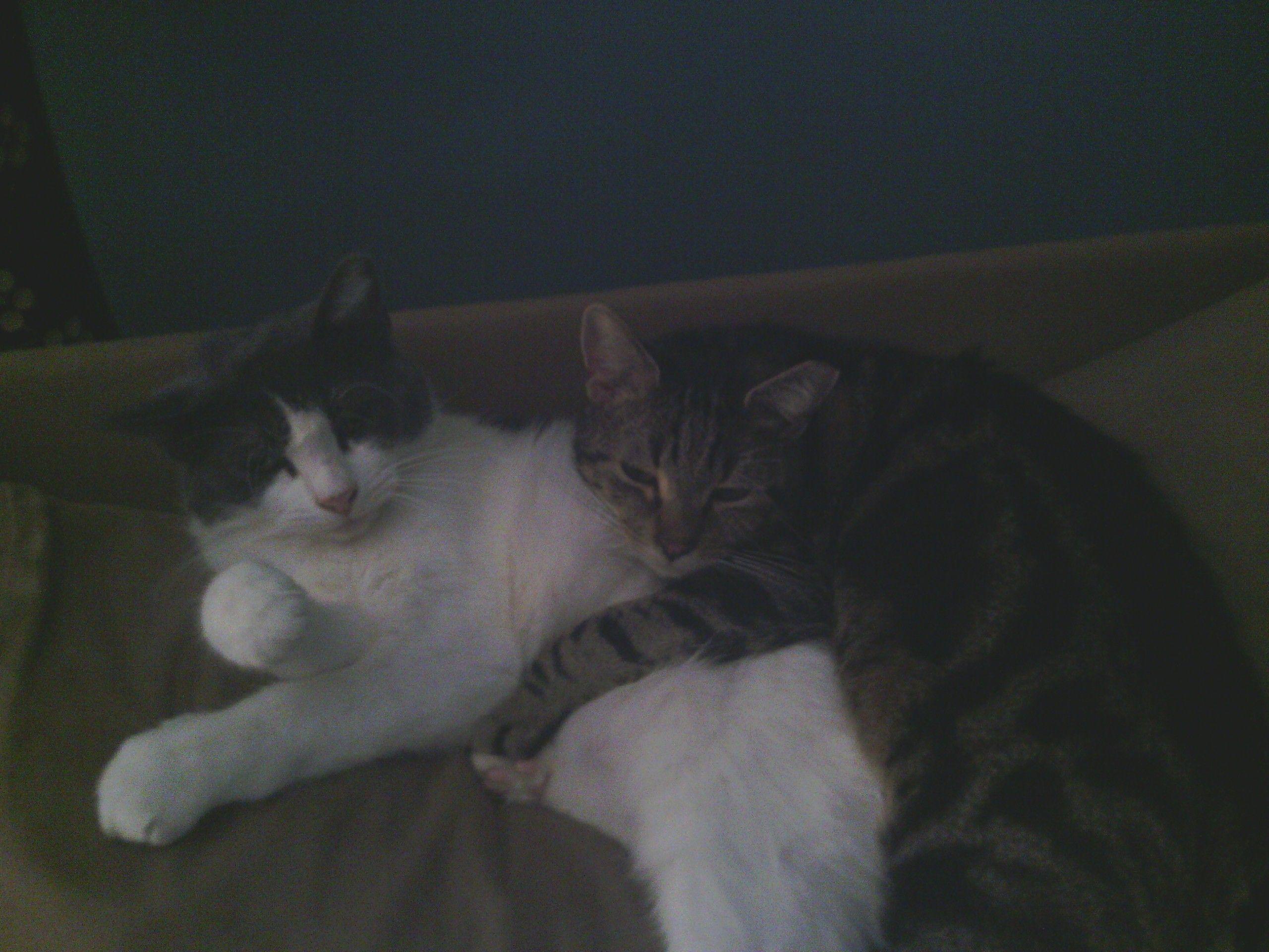 Cuddly nap time!