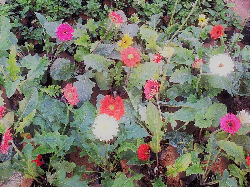 Pin By Tharindu On Polwatta Plant Nursery Plant Nursery Plants Buy Plants