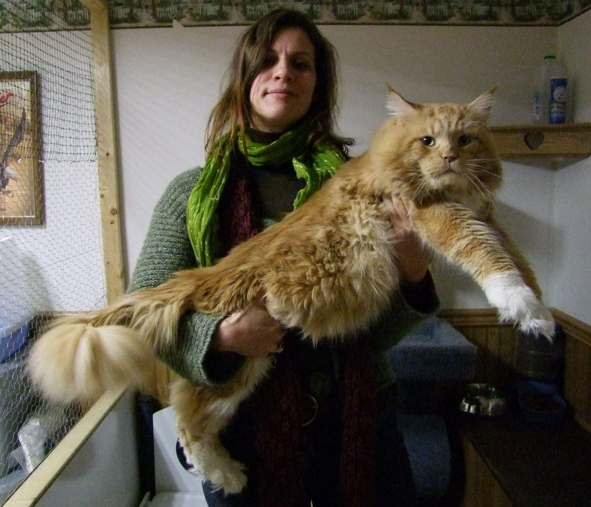Giant cat Pickles