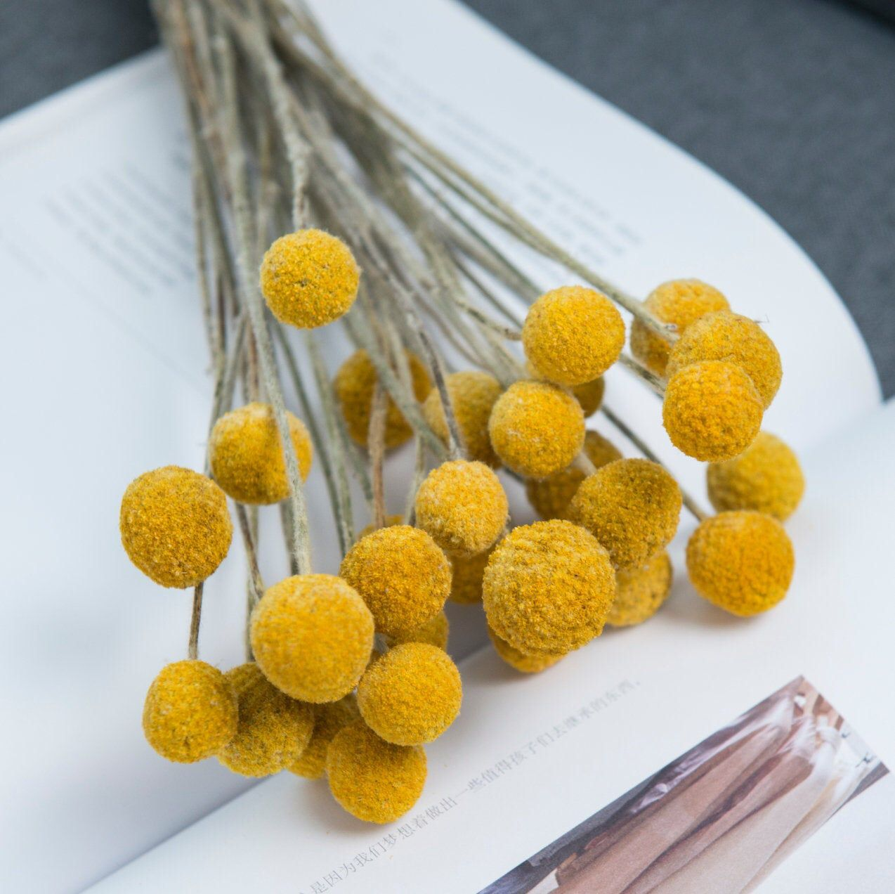Dried Real Natural Craspedia Flowersbilly Button Etsy Billy Buttons Dried Floral Dried Flowers