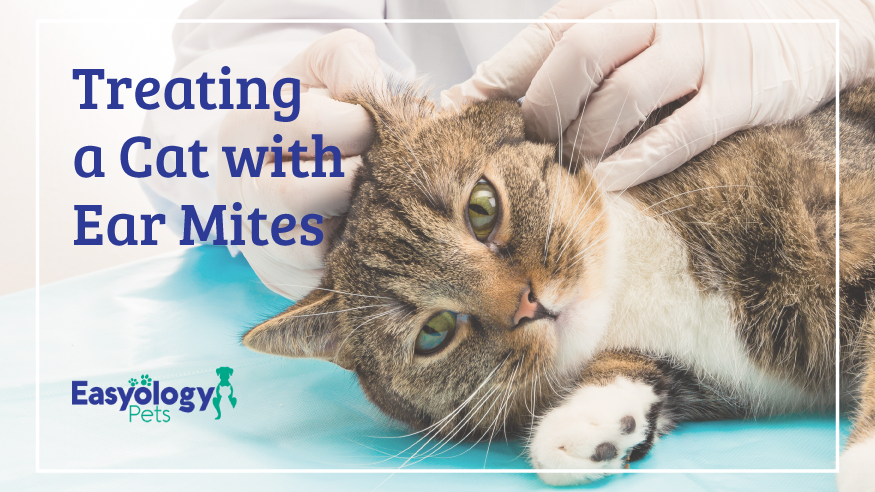Remedies For Ear Mites In Cats Pet Care Cats Baby Cats First Time Cat Owner