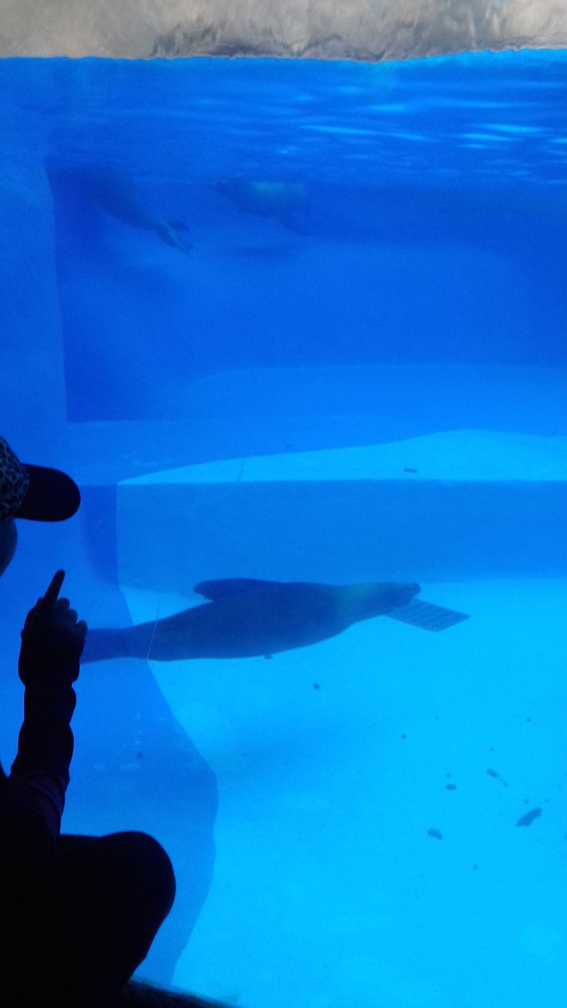 fish tank in 2020 Big fish tanks, Fish tank, Big fish