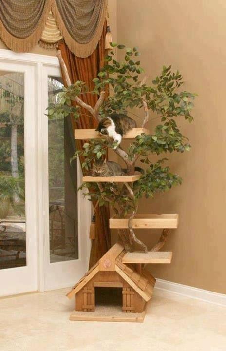 Una casita muy original, con entretenimiento incluido para los gatitos... :)