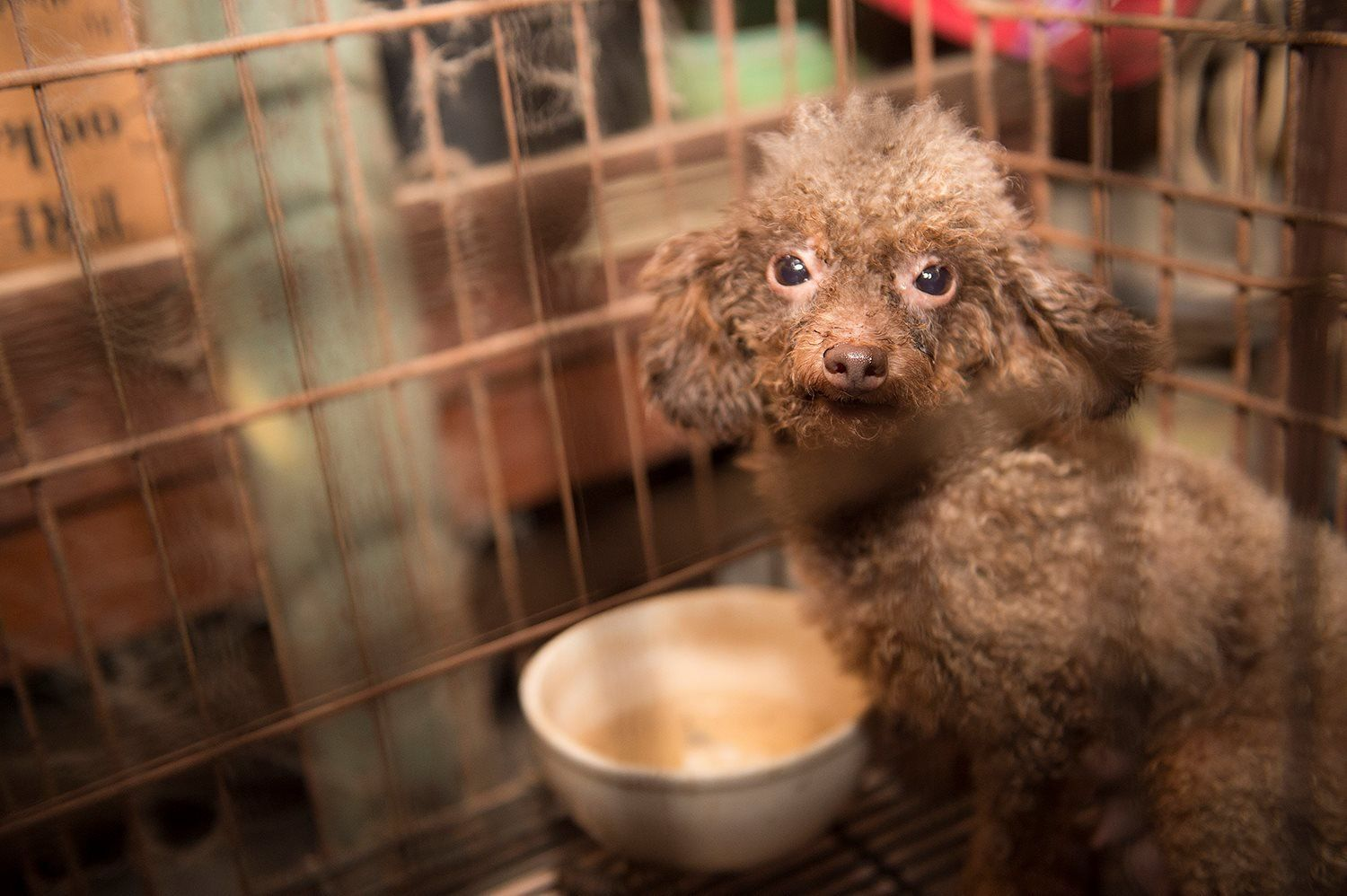 Is There A Puppy Mill In Your Neighborhood This Report Can Tell You Puppy Mills Puppy Mill Rescue Puppies