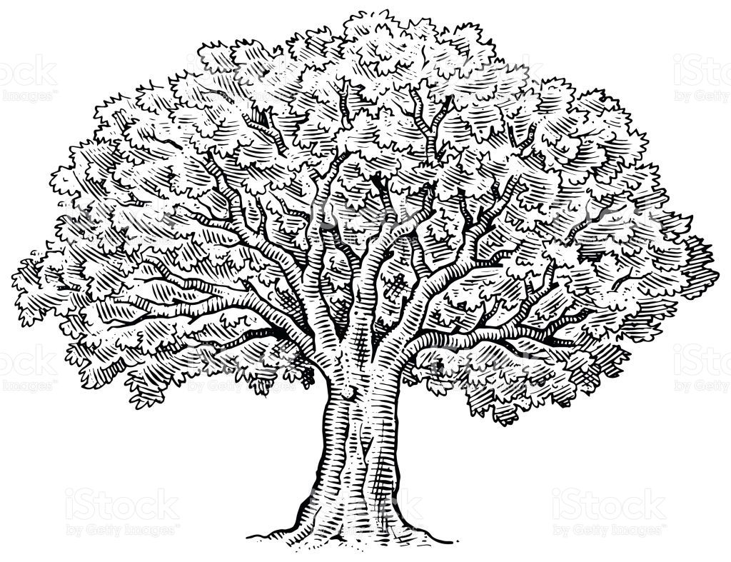 A Large Tree Drawn In Pen And Ink In
