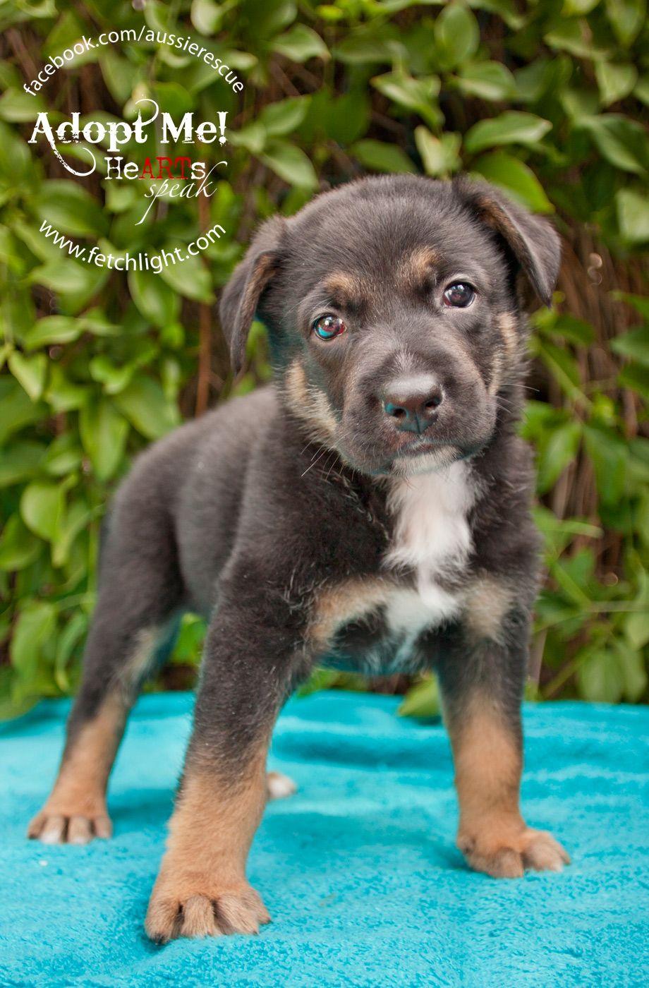 Puppy rescue san diego ca