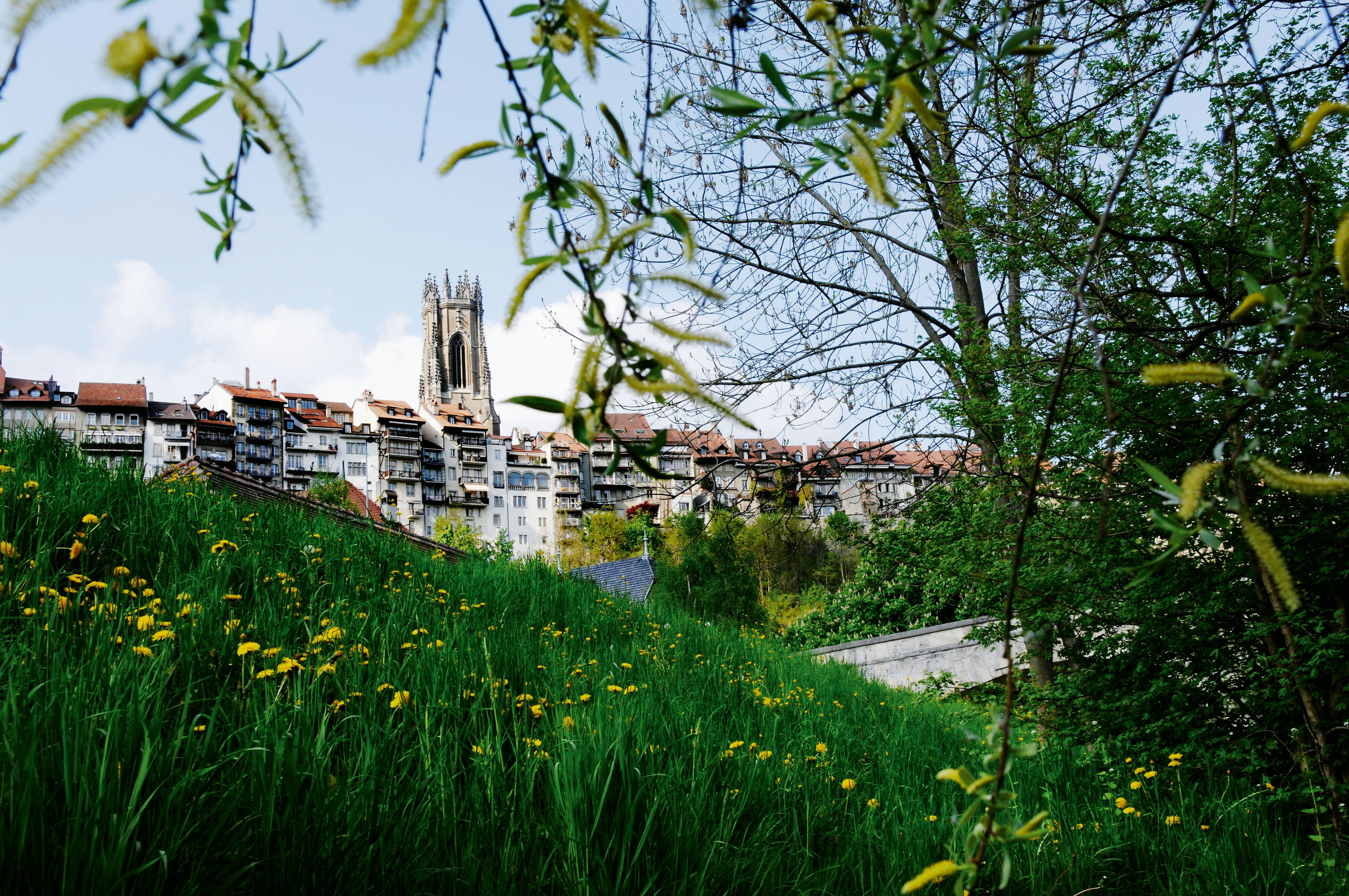 The old town of Fribourg with the famous cathedral.  © Thierry Pradervand #fribourg #summer #oldtown #flowers