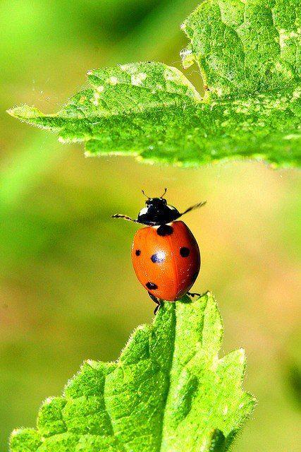 #natura #crescita #frutta #verdura #salute #bio #alimentazione #cibobambino